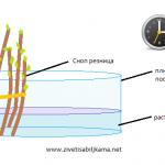 hormon rastvor skica