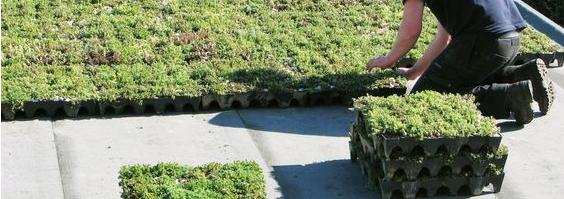 Zeleni krov i zid